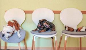 Tierarztpraxis Am Drömling