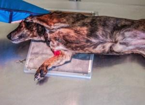 Tierarztpraxis Am Drömling - Leistungen